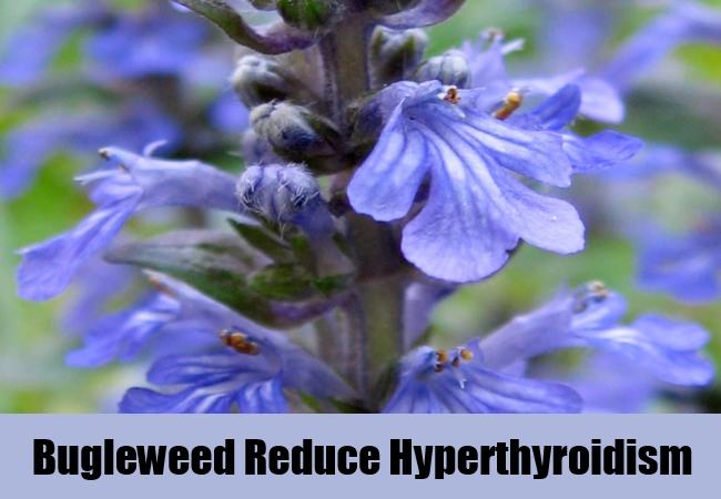 bugleweed-reduce-hyperthyroidism