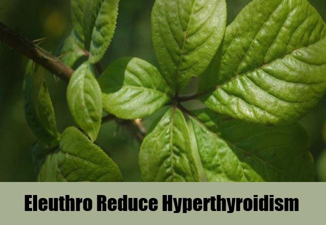 eleuthro-reduce-hyperthyroidism