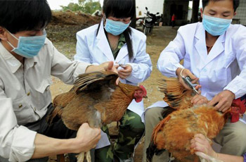How-Bird-Flu-Kills