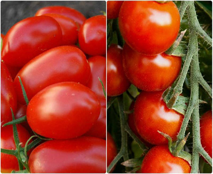 Grape Tomato vs. Cherry Tomato