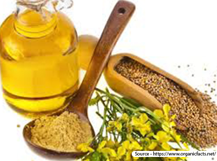 Health Benefits of Mustard Essential Oil